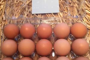τι είναι αυγό